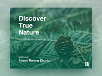 🌲 Discover True Nature w/ Forest Service🌲