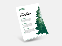 🌲 Forest Service | Pynophyta 🌲