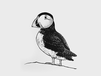 Hand Drawn Puffin