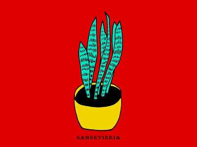 Succulent 01 succulent indoor plant pop art drawing illustration evergreen saint georges sword mother-in-laws tongue snake plant sansevieria trifasciata sansevieria pinguicula vipers bowstring hemp