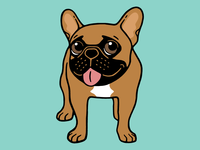 Black Mask Fawn French Bulldog is ready to play