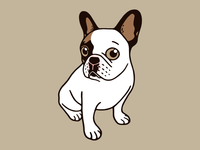 The Adorable Fawn Pied Frenchie