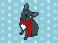 Cute blue Frenchie is ready for winter