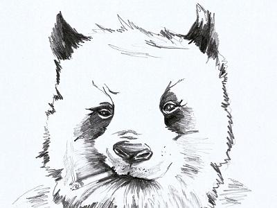 Sunday Special illustration smoking t-shirt drawing bear panda