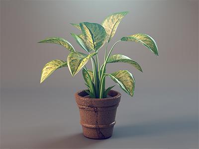 3D Plant  3d plant house plant pot green leaf realistic cody courmier denver eco