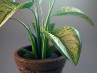 Plant 2 large