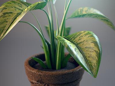 3D Plant 2 3d plant house plant pot green eco real render cody courmier