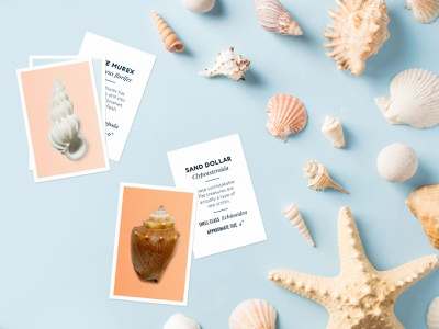 Seashell Scavenger Hunt printables activities kids scavenger hunt seashell shell sea texture vintage illustration