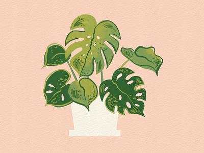 Vectober 14 - Plants monstera plant paint sketch procreate vectober inktober mid century feminine texture vintage illustration