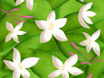 Jasmine flowers jasmine flowers