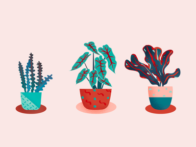 House Plants digital illustration plant branding graphic illustration design house plants graphic design