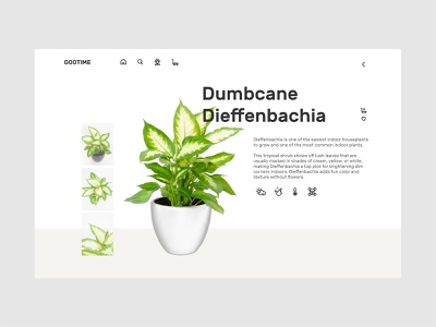 Plant Shop - Product brand product adobe xd responsive design minimal animation web icon typography ux ui