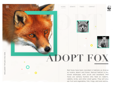 Foxes - WHF redesign