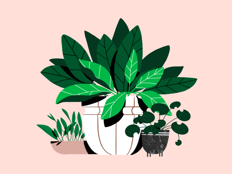 Plants cozy home nature greenery plants plant pattern texture draw character art design illustration graphic design