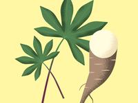 Illustration of a Mandioca/Macaxeira