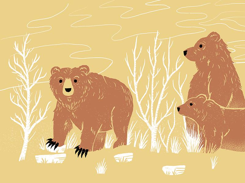 Bears museum ipad texture bears science live drawing sketchbook illustration procreateclub