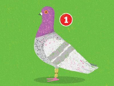 Pigeon Messanger
