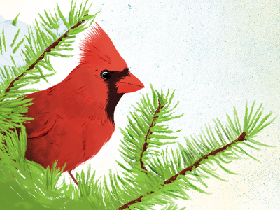Holiday Cardinal Illustration snow tree fir tree holiday holidays christmas bird cardinal illustration