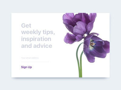 Sign Up Modal simple layout tulip flowers sign up purple modal