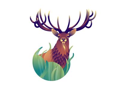 Deer Series - Stag