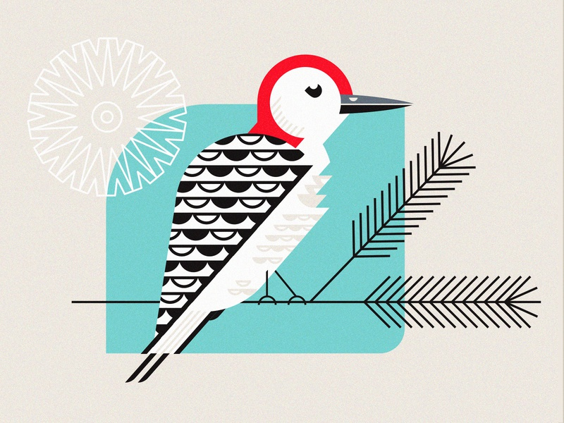 Redhead geometric illustration bird woodpecker