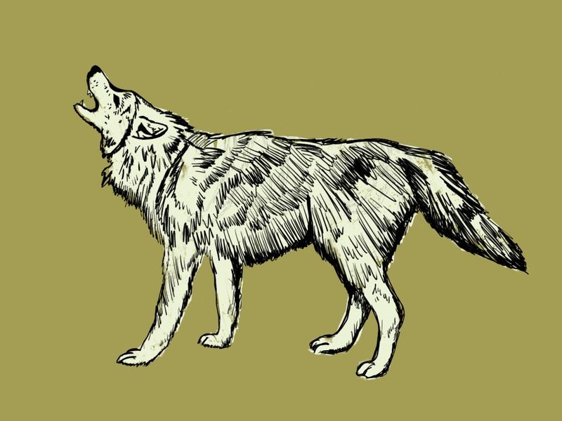 Wolf sketch apple pencil procreate wolf