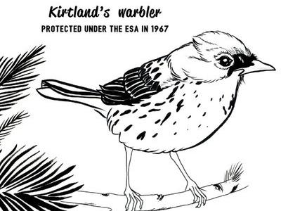 Kirtland's warbler endangered species conservation wildlife conservation animals comics ink