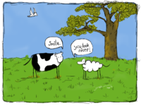 Cow And Sheep Smile