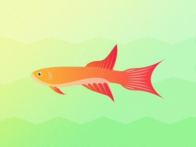 Gillustrations - Lyretail Killifish