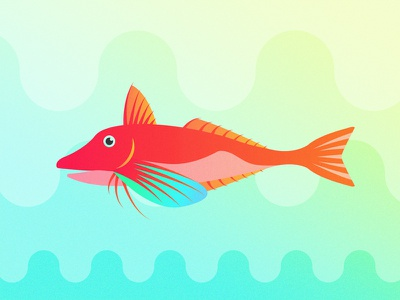 Gillustrations - Red Gurnard fish red gurnard fins gills gillustration gillustrations gradient illustration ocean profile sea