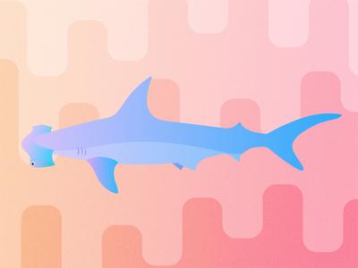 Gillustrations - Hammerhead Shark