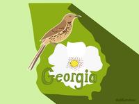 Georgia State bird illustration