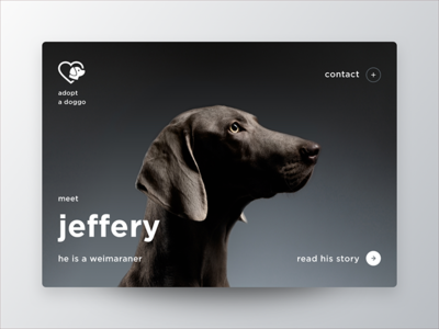 Dailyui 6 Profile Mk card profile dog ui daily doggo