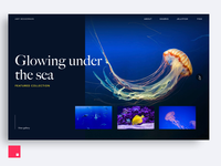 InVision Studio — Under the Sea Portfolio