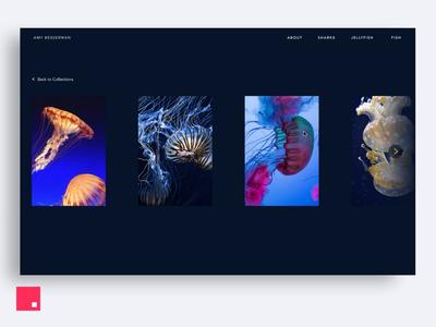 InVision Studio — Under the Sea Gallery transition invision design tools animation design