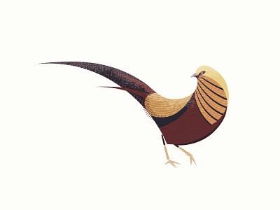 Golden Pheasant texture wildlife bird illustration flat vector