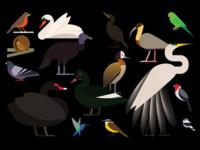 Aves Do Ibirapuera
