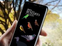 Aves da Praça Benedito Calixto