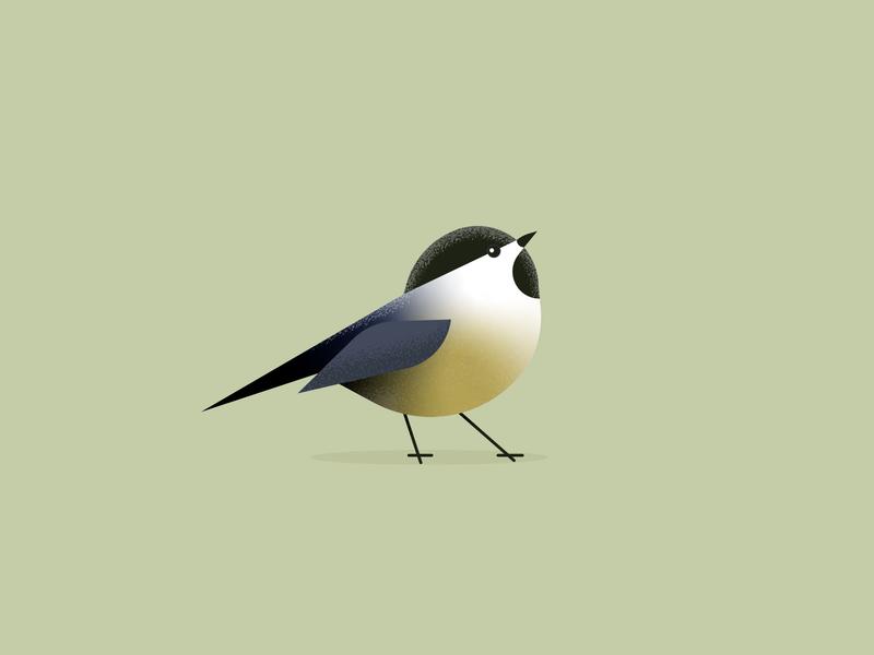 chickadee flat midcentury modern vector nature wildlife illustraion bird illustration bird