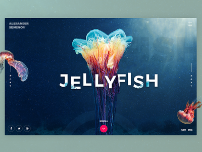 Jellyfish inspiration jelly landing photography ocean fish jellyfish design web