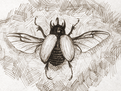 Rhino Beetle Sketch