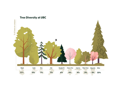 Forestry Infographic trees forest infographic vector illustration