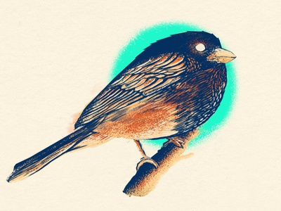 Finch wip wacom digital painting teal finch brid illustration