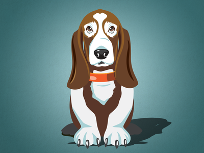 Basset Illustration