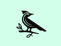 Woodpecker Sketch