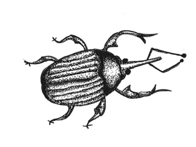 Horatio black and white bug stipple ink pen illustration