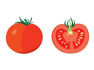 tomatoes tomato vegetable illustrator vector plant illustration