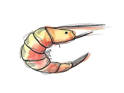 Shrimp adobe photostop advertising seafood shrimp ink illustration watercolor