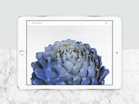 Ceramics website - First take