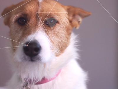 Doggie UI Test Tracking
